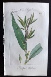 Sowerby C1805 Hand Col Botanical Print. Bedford Willow 1809